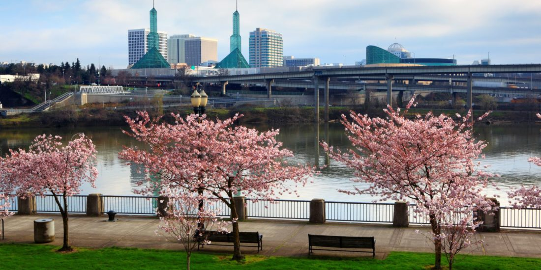 Portland Oregon's waterfront park during the cherry blossom season.