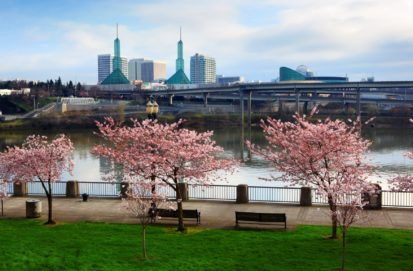 Portland Oregon's waterfront park during the cherry blossom season.